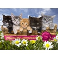 Personalised Cats In A Basket Poster